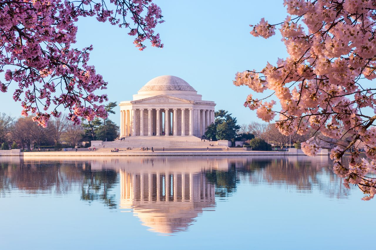 Jefferson Memorial in DC through cherry blossoms