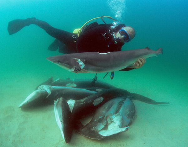 What Food Do Sharks Eat
