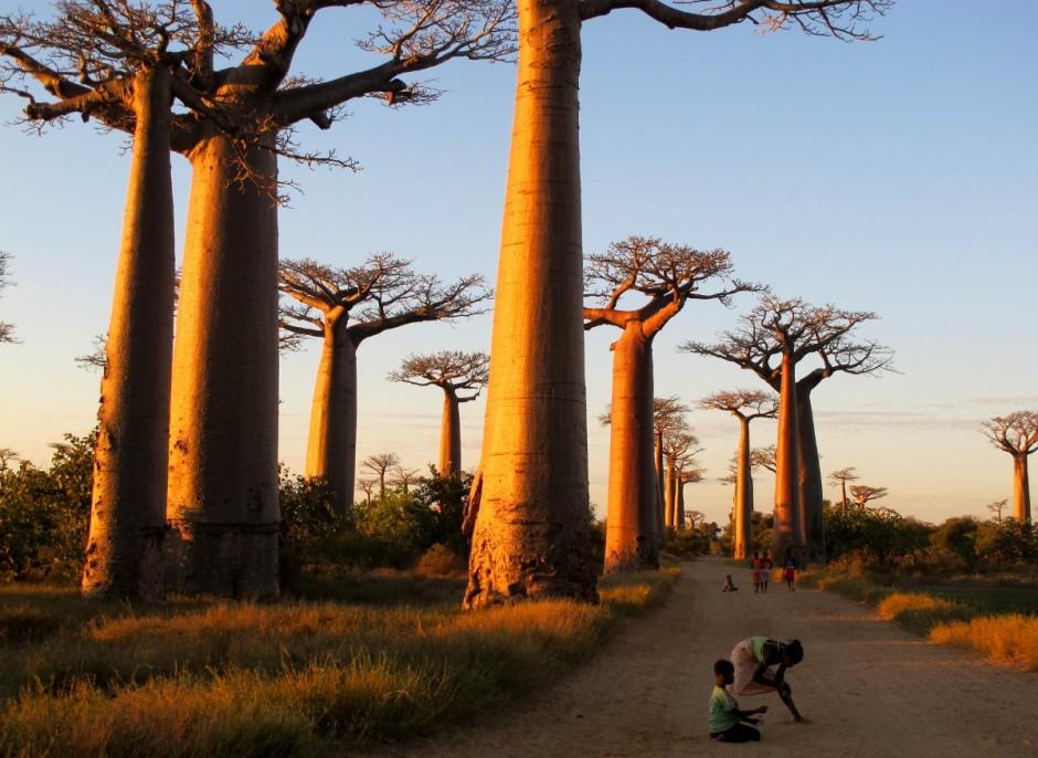 Madagascar essay