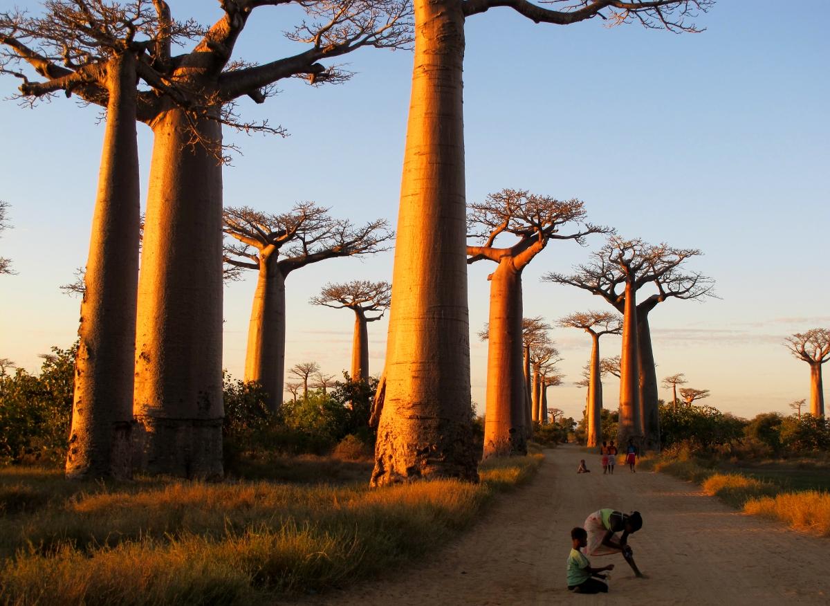 photo essay  avenue du baobab  madagascar