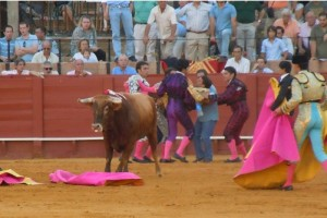 bull fight injury