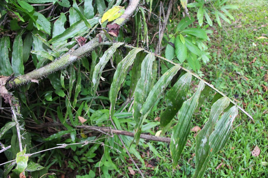 11 more miracle remedies from Belize - Matador Network