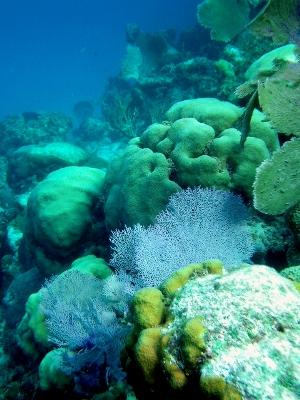 Underwater photography - Norbert Figueroa