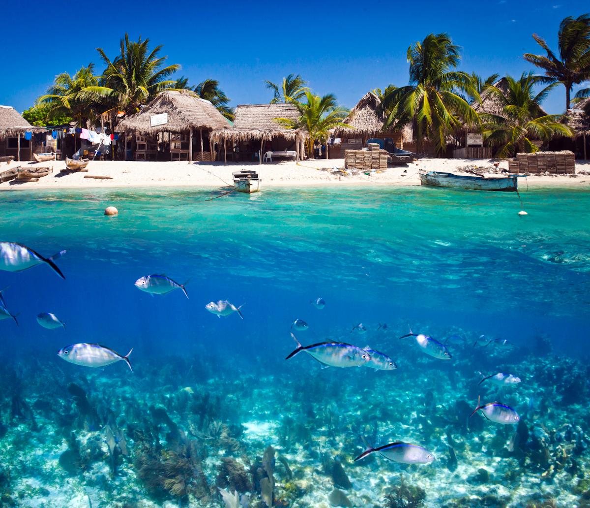 essay about underwater world