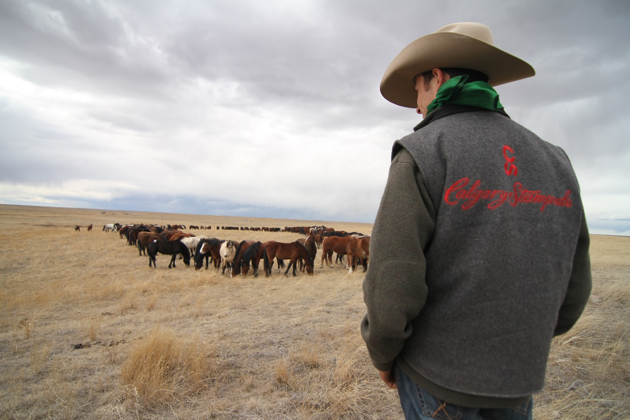 Life On The Calgary Stampede Ranch Matador Network