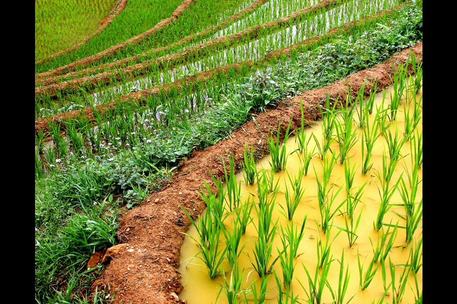 30 Spectacular Examples Of Terraced Agriculture Pics Matador Network