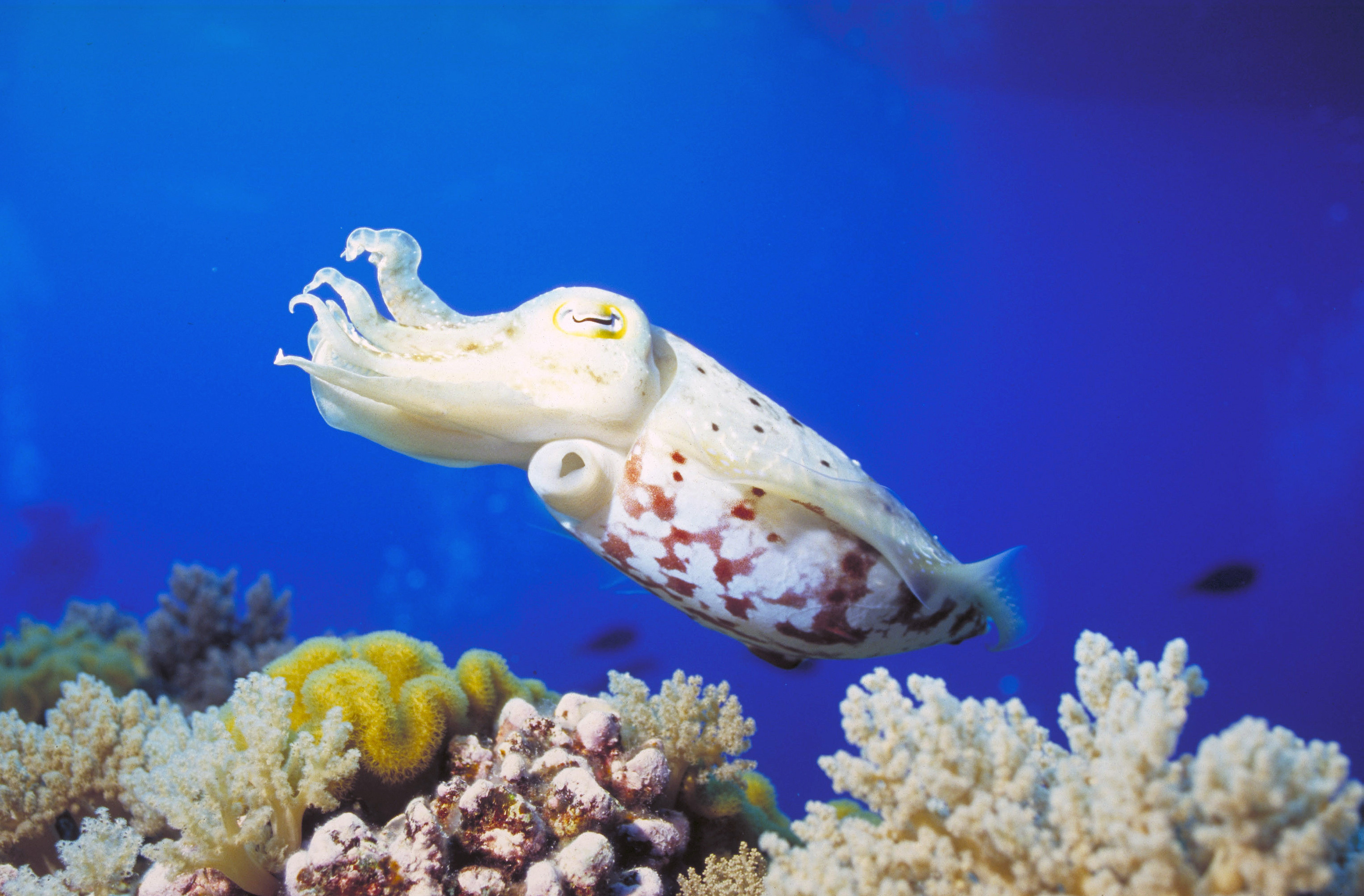 11 bizarre species to look for on a Great Barrier Reef ... - photo#6