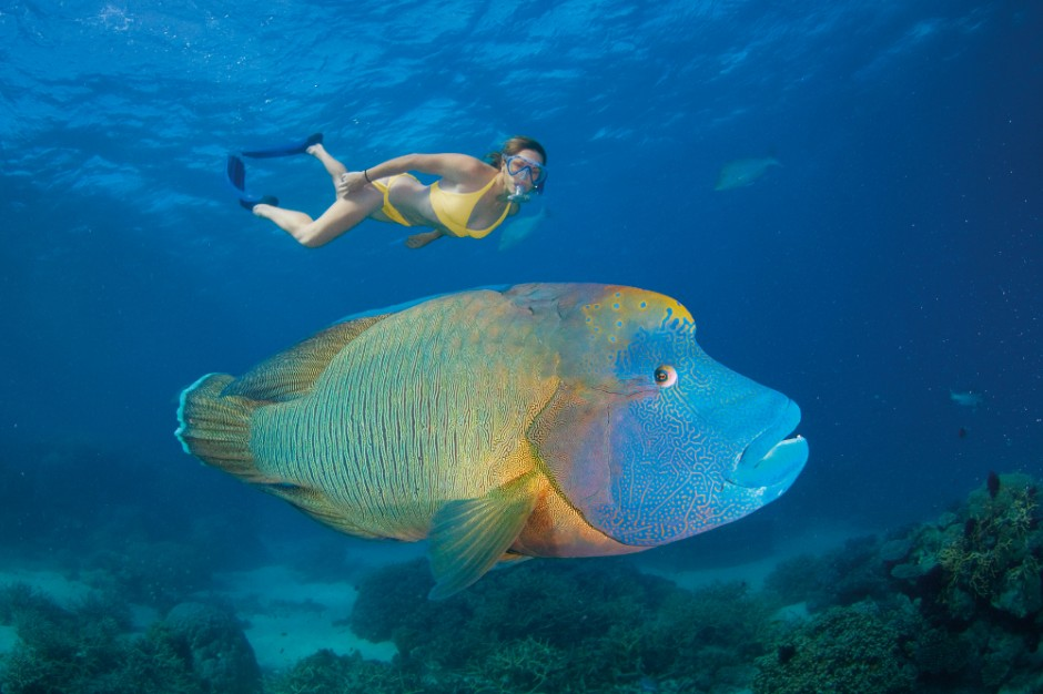 Coral Reef Weird Fish 1