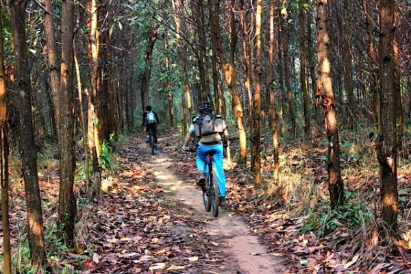 Mountain biking through acacias