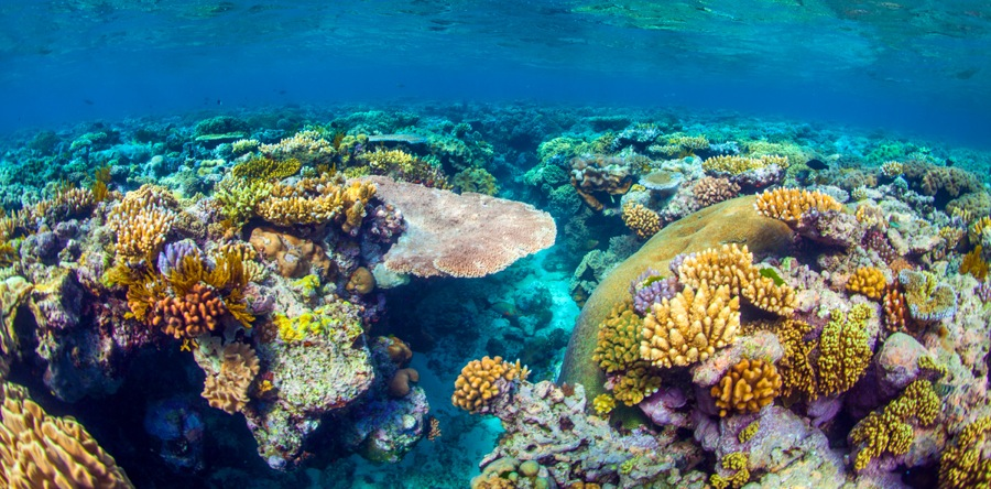 Image result for great barrier reef underwater""