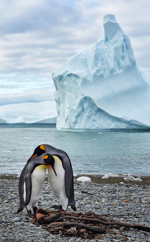 Field notes from a conservation biologist in Antarctica ...