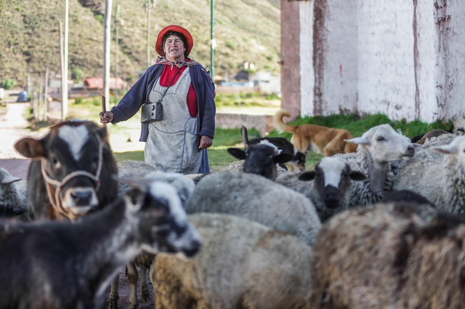 A shepherd with livestock