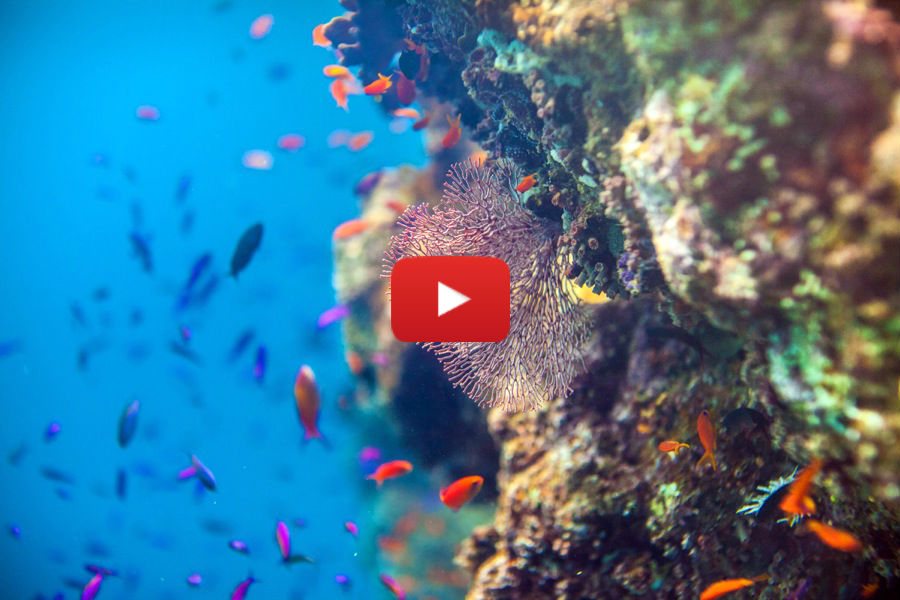 This may be the most intimate look at the Great Barrier Reef we've seen