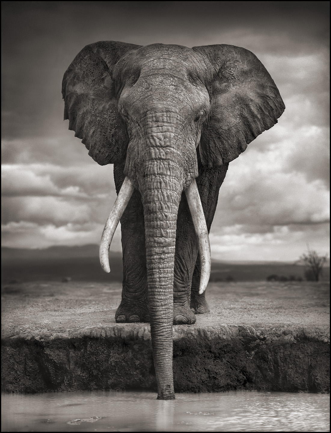 An elephant by water