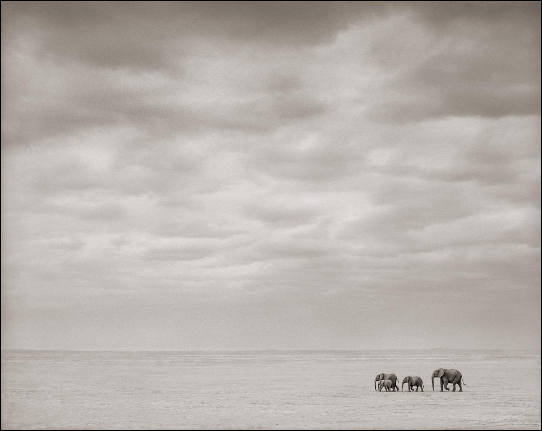 Elephants walking in the distance