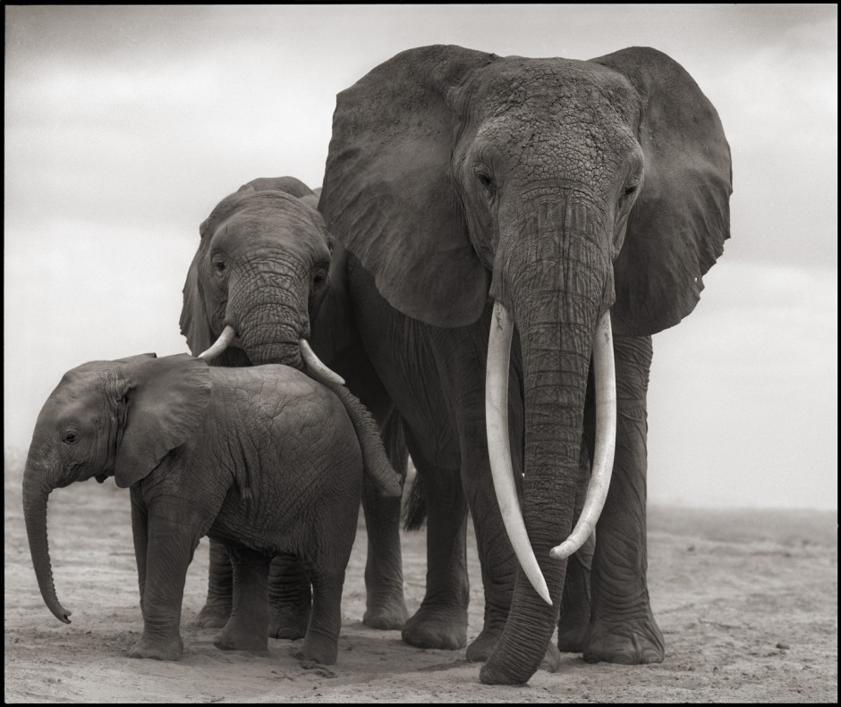 Elephant with daughters
