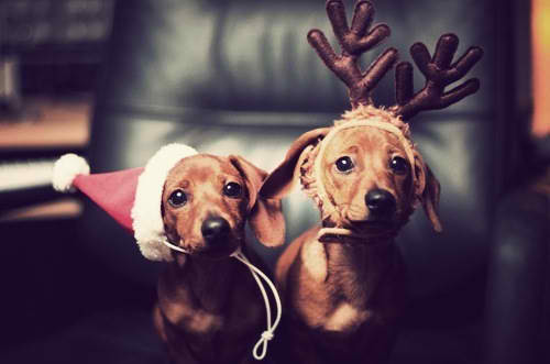 Dogs in holiday hats