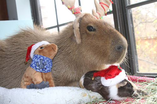 Pets with antlers and hat