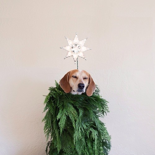 Dog wearing holiday costume