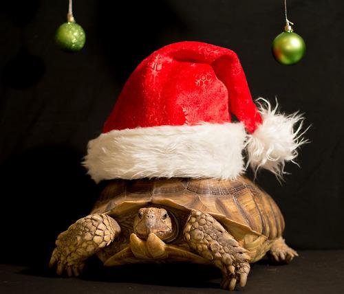 Turtle under hat