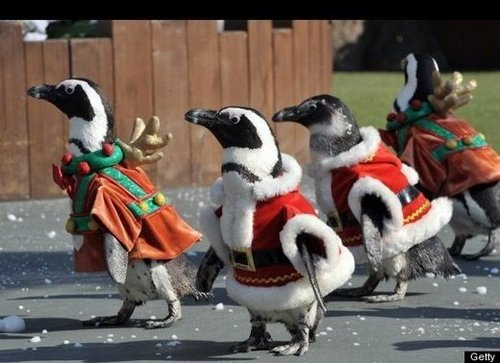 Penguins in costumes