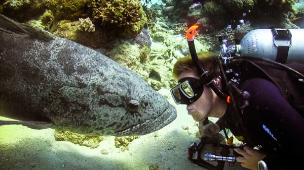 Diver near fish
