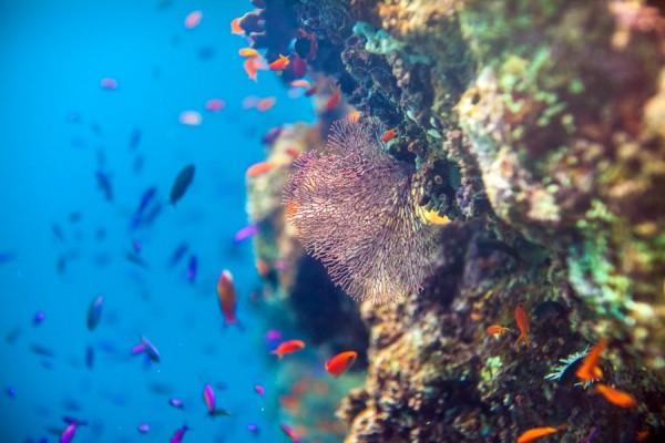 Fish swimming near coral