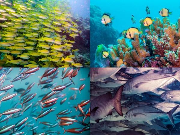Fish collage