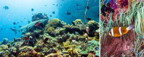 Fish among coral