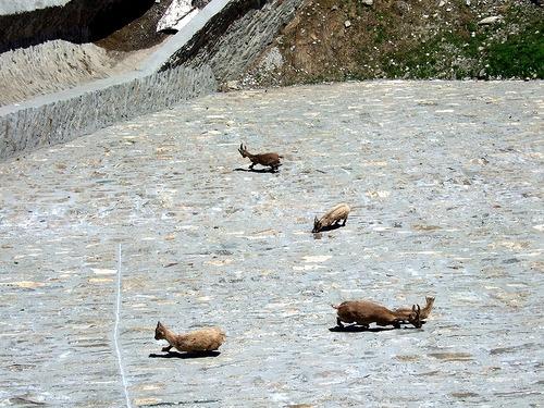 goat-dam-3