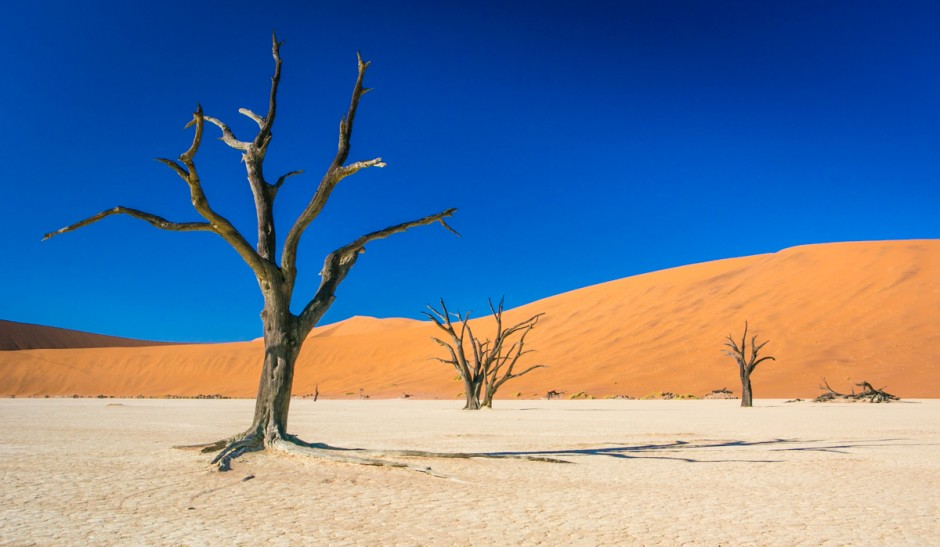 31 Surreal Images Of Dead Vlei Namibia S Picture Perfect