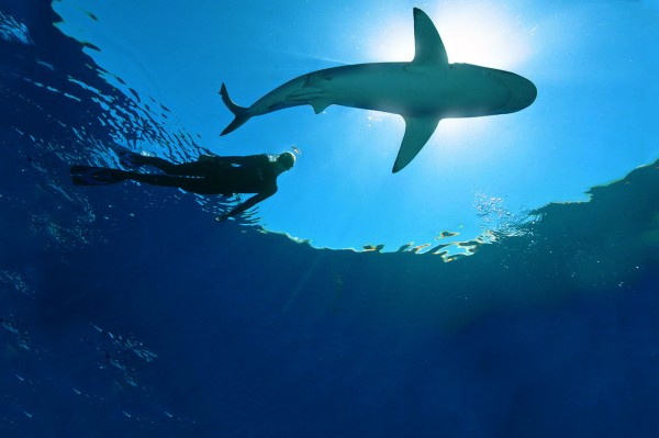 Photo: OceanRamsey.com