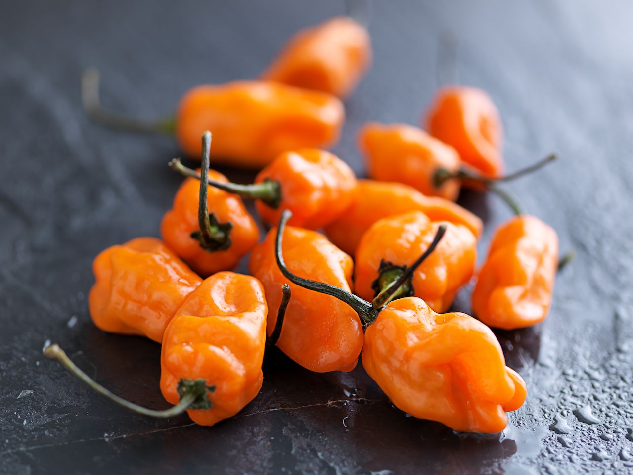Orange habanero peppers