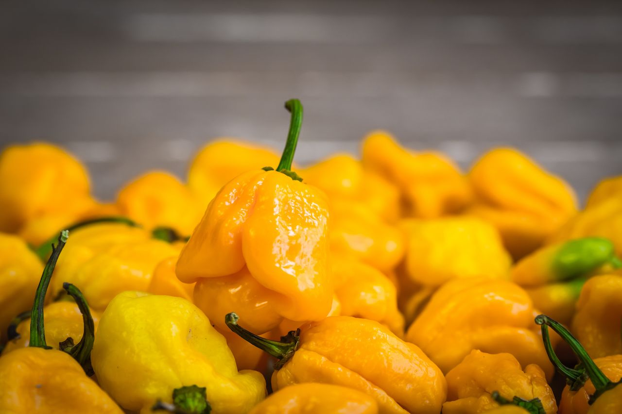 Yellow spicy naga viper chilis