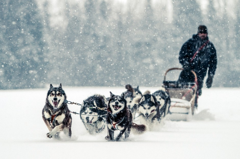 Dogsledding Quebec
