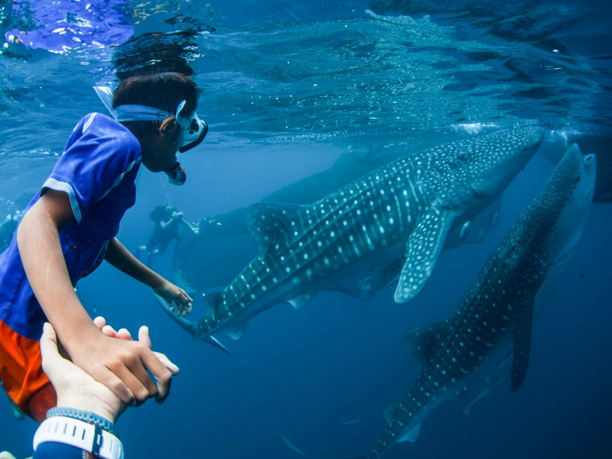 Free-diving with the whale sharks of Papua [pics]