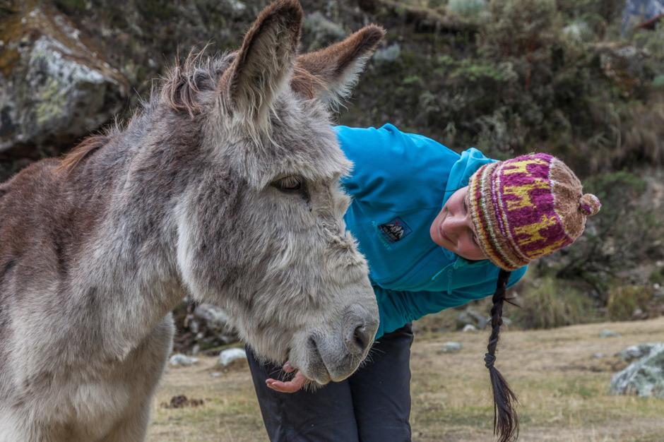 Donkey Peru
