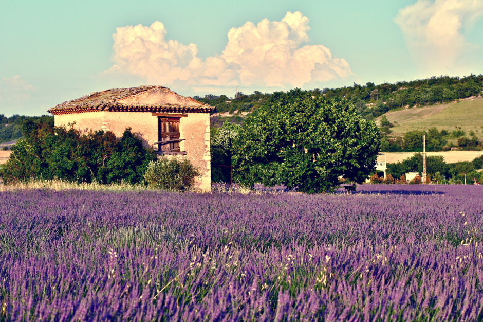 Provence wildflowers