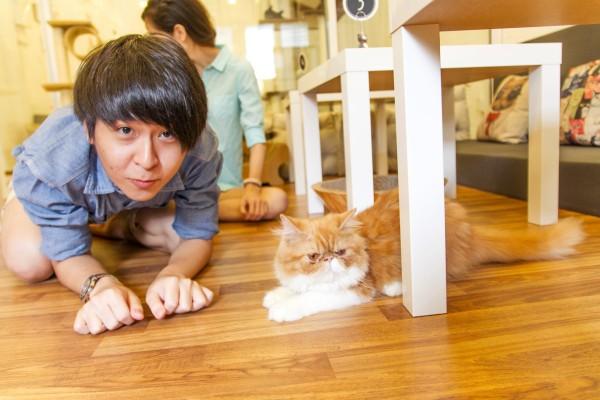 Purrfect-Cat-Cafe-penang