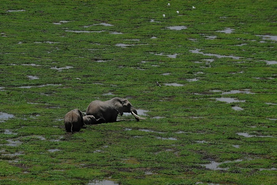 KENYA-TANZANIA-WILDLIFE-CENSUS