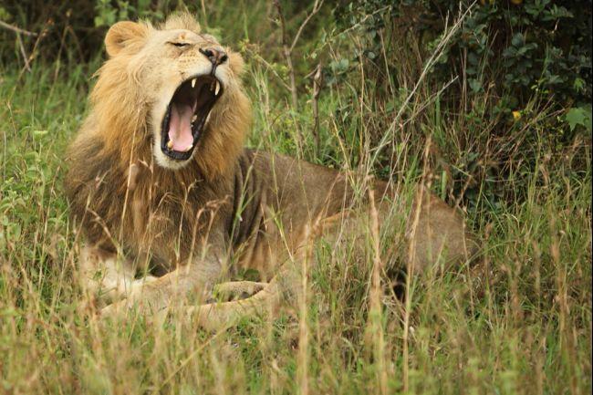 nairobi-lions-park