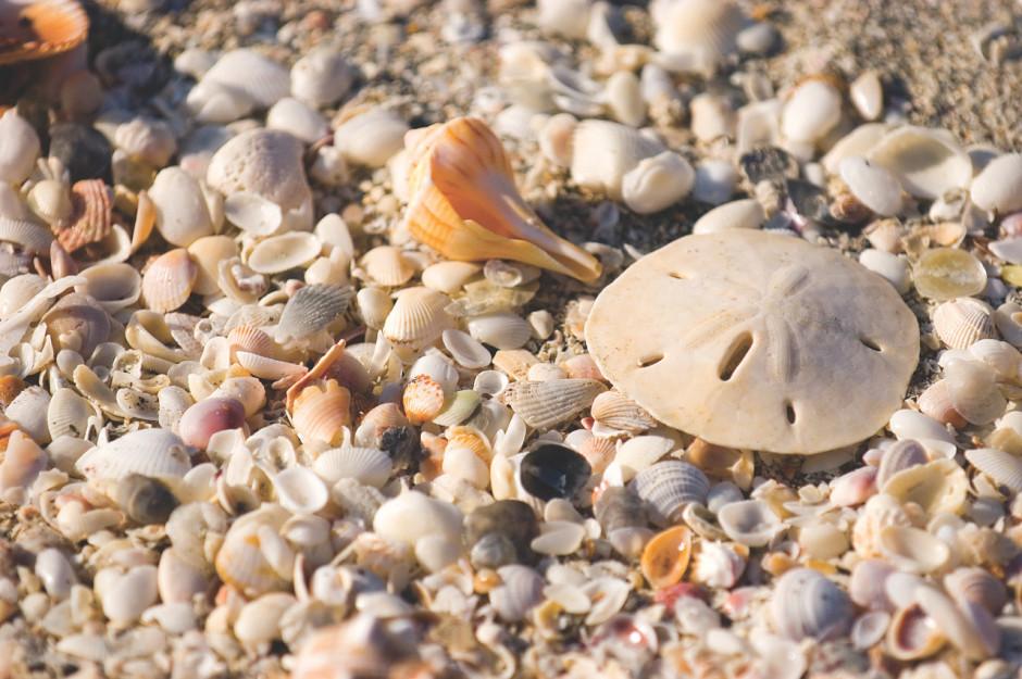 Sanibel beach shells