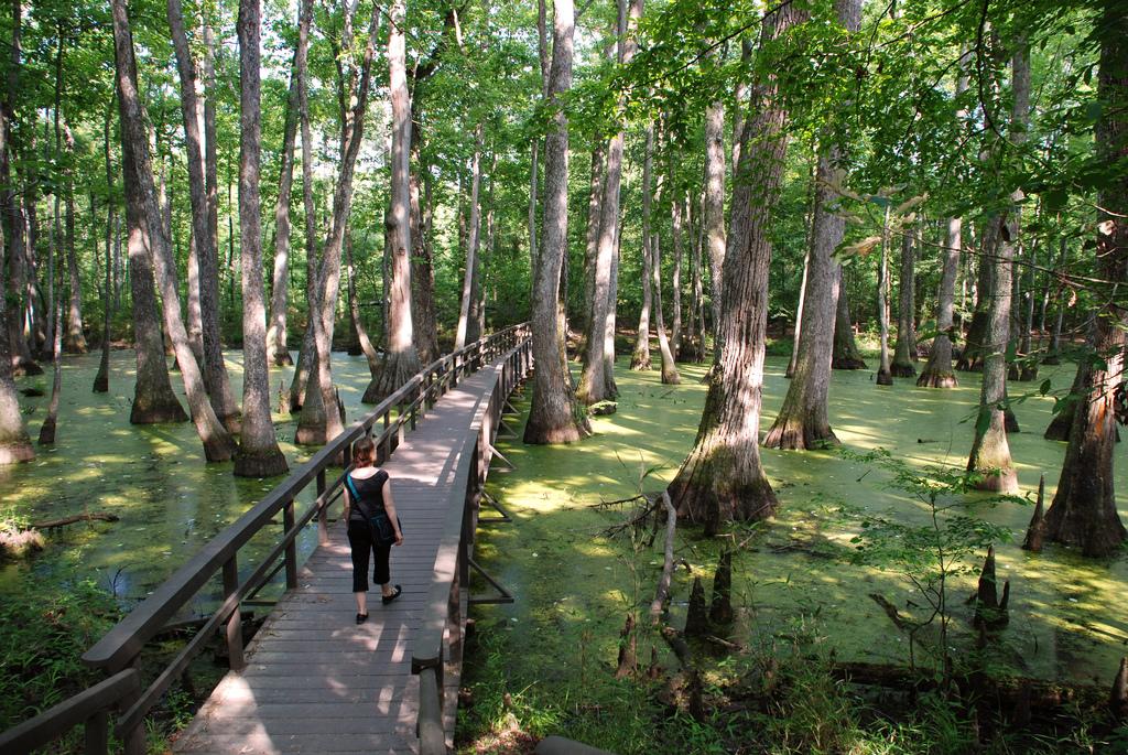 natchez swamp