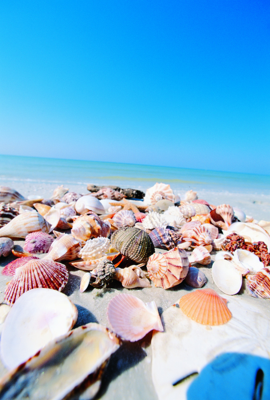 Beach shells, Sanibel Island