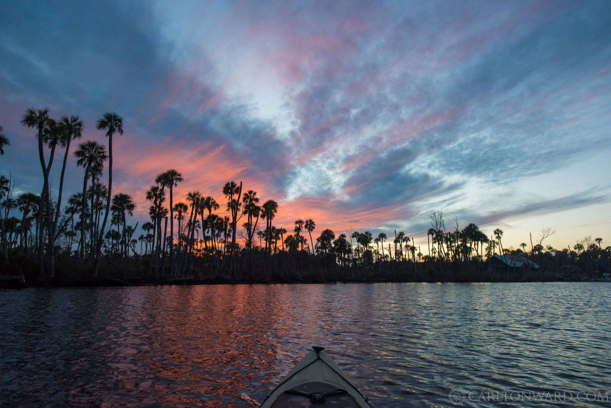 Photo: Carlton Ward Colors explode over the palms during a beautiful evening on the Chassahowitzka River.