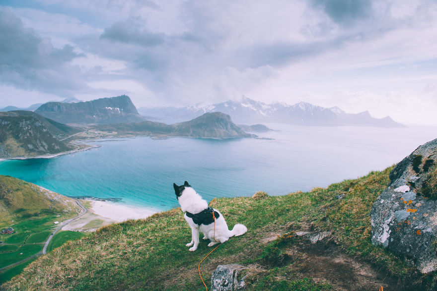 Meet The Man Who Quit His Job To Hike Across Norway With His Dog - Guy quits his job to go on epic adventures with his husky