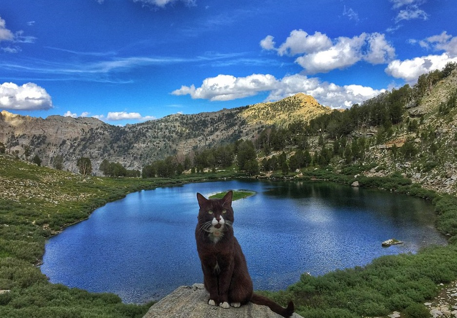Adventurous cat hikes in America's wilderness with his owner and loves every bit of it