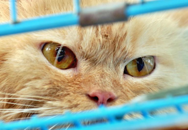 Australia plans to kill two million feral cats. Before you get mad, hear them out.