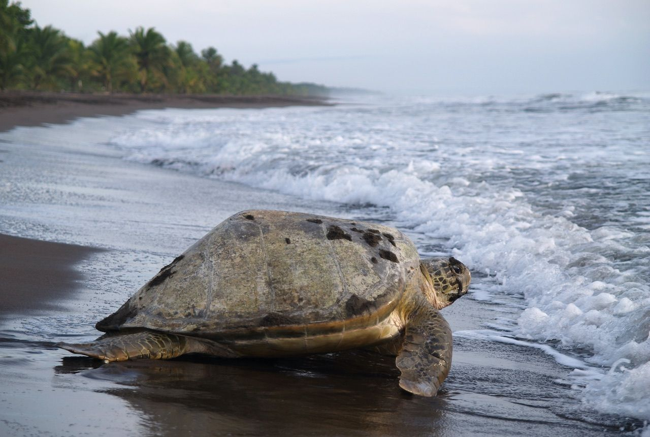 Travel guide to Costa Rica's top 5 national parks