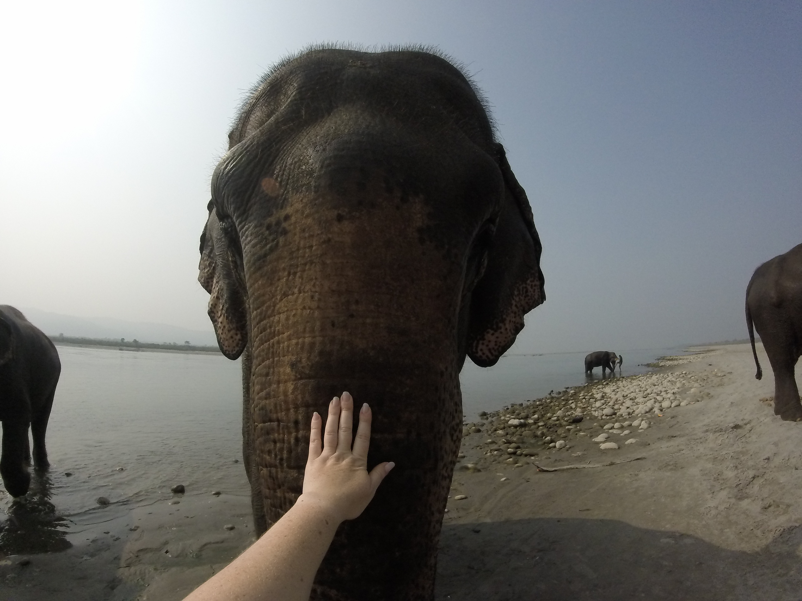 Photo: Visitors can help bathe elephants in Chitwan National Park. Elen Turner